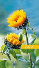 Terminarz tygodniowy Kolorowy - Słoneczniki - Z tygodnia na tydzień 2020 roku,