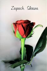 Notatnik - Zapach Słowa czerwona róża - ,